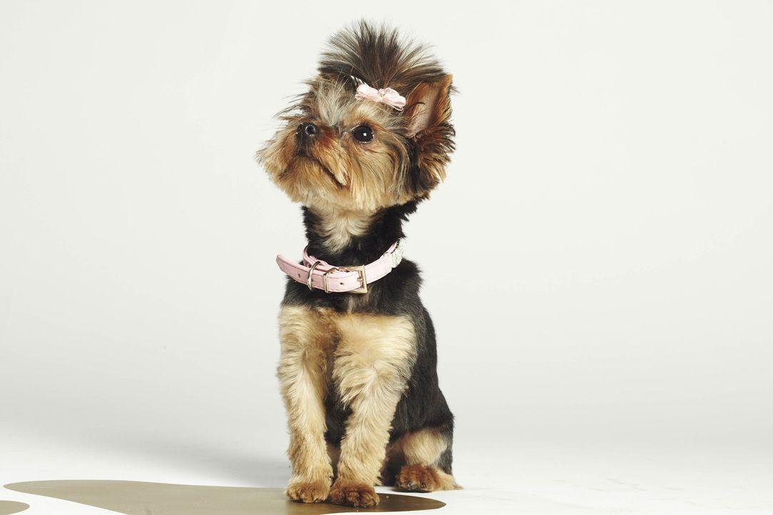 """Kann Boo die """"Top Dog Model?-Jury von sich überzeugen? - Bildquelle: 12 Yard Productions/ITV"""