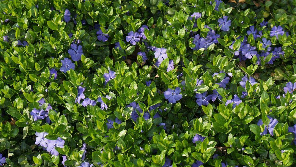 Bodendecker Pflanzen Verschiedene Arten Sat 1 Ratgeber