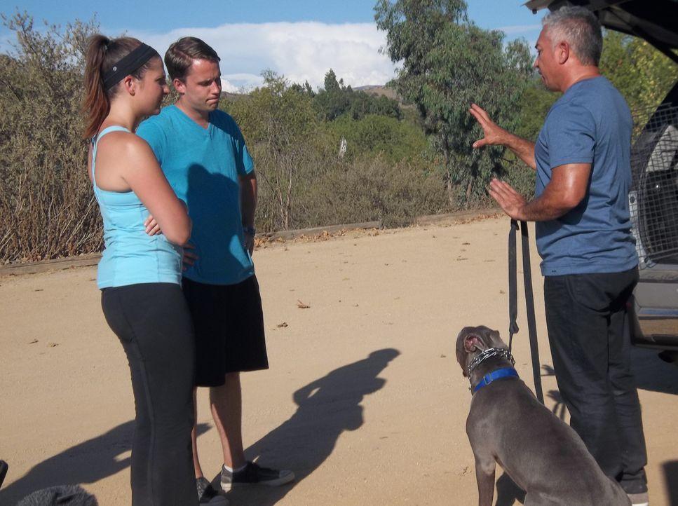 Die Beziehung von Aileen (l.) und Brent (M.) wird durch ihren Hund Titan vor große Schwierigkeiten gestellt. Kommt Cesar (r.) noch rechtzeitig, um e... - Bildquelle: NGC/ ITV Studios Ltd