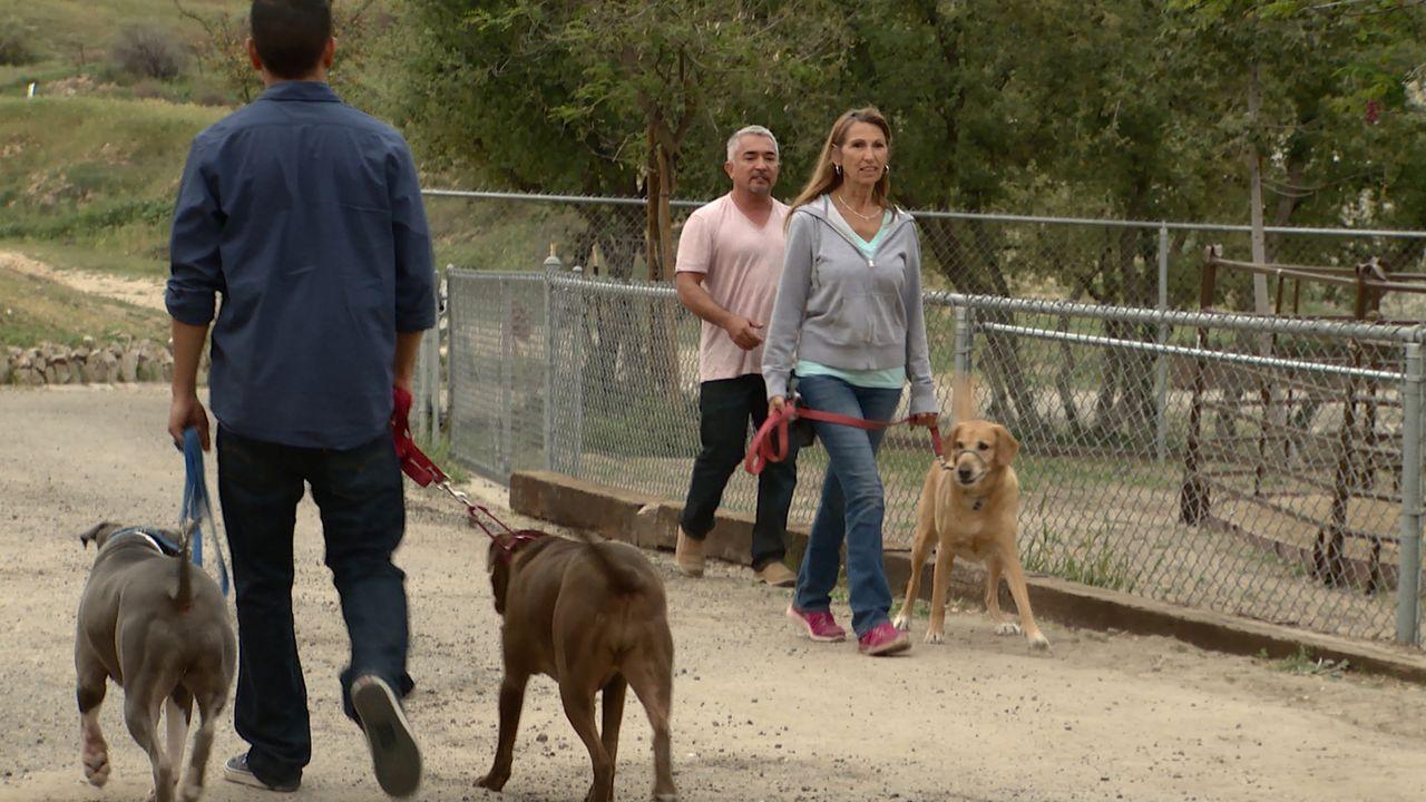 Gelingt es Cesar (M.), Leslie (r.) beizubringen, wie sie ihren Labrador Buddy richtig korrigiert, damit dieser aufhört, ihren Enkel Mason zu terrori... - Bildquelle: NGC/ ITV Studios Ltd