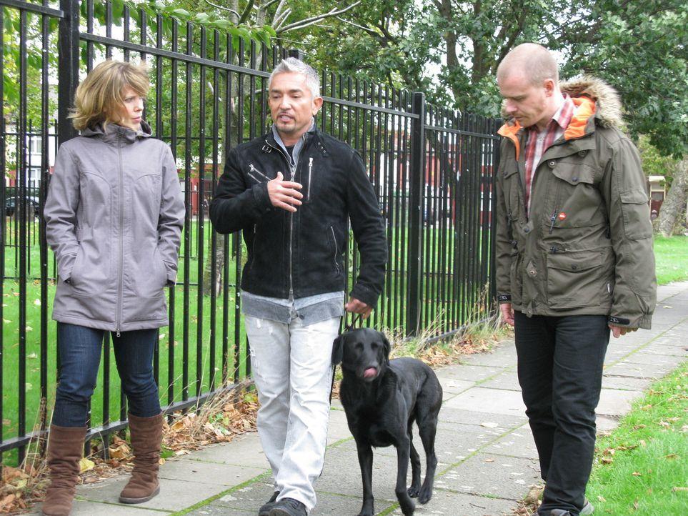 Cesar (M.) kümmert sich heute um drei tierische Problemkinder aus Großbritannien ... - Bildquelle: Ryan Cass MPH - Emery/Sumner Joint Venture