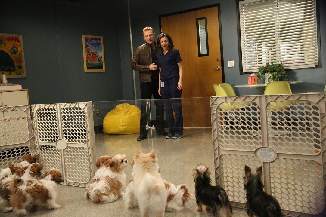 Nach einem anstrengenden Tag hat Owen (Kevin McKidd, l.) eine Überraschung für Amelia (Caterina Scorsone, r.) ... - Bildquelle: Mitchell Haaseth ABC Studios