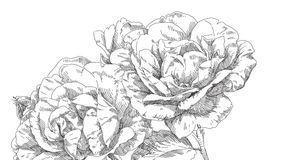 Deko & Basteln_2015_09_28_Rosen zeichnen_Bild 3_fotolia_irina_katunina