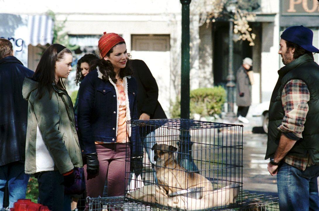 Bei Rory (Alexis Bledel, l.), Lorelei (Lauren Graham, M.) und Luke (Scott Patterson, r.) ist immer etwas los ... - Bildquelle: 2000 Warner Bros.