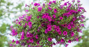 Platzsparend und dekorativ: Hängen Sie Ihren Blumentopf einfach an die Decke.