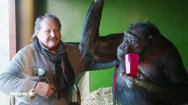 Abenteuer Leben - Abenteuer Leben - Freitag: Leben Mit Dem Schimpansen