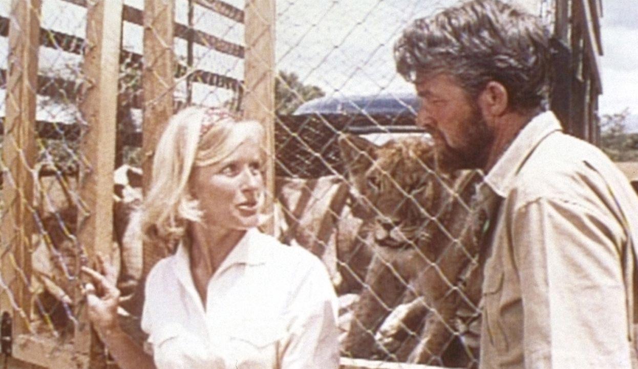 George Adamson (Bill Travers, r.) und seine Frau Joy (Virginia McKenna, l.) haben verwaiste Löwenbabies großgezogen. Schweren Herzens geben sie di... - Bildquelle: 1965, renewed 1993 Columbia Pictures Industries, Inc. All Rights Reserved.
