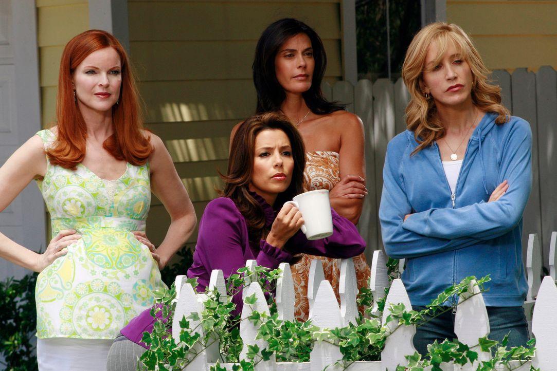 Wollen nie mehr Geheimnisse voreinander haben: Lynette (Felicity Huffman, r.), Bree (Marcia Cross, l.), Gabrielle (Eva Longoria, 2.v.l.) und Susan (... - Bildquelle: ABC Studios