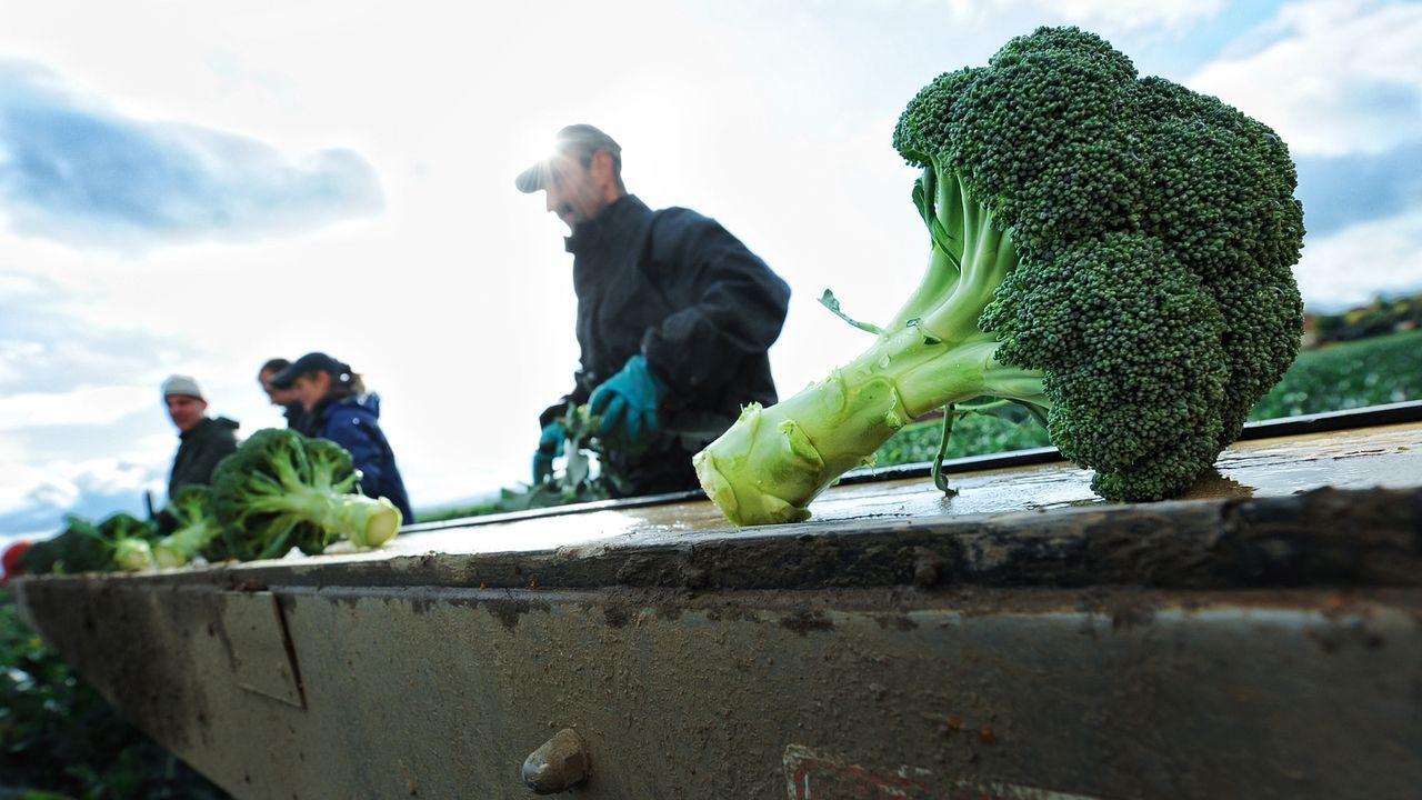 wintergemuese-broccoli-10-10-19-dpa - Bildquelle: dpa