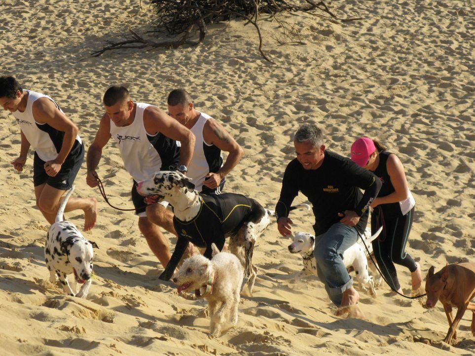 Die Deutsche Dogge Willow kann einfach nicht damit aufhören ihr Herrchen Paul Watson zu beißen. Kann Cesar Millan (r.) da helfen? - Bildquelle: 2014 Rive Gauche Television. All rights reserved.