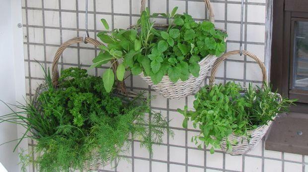 Ob selbst angebaut oder gekauft – mit ein paar Kräutern lässt sich auch diese...