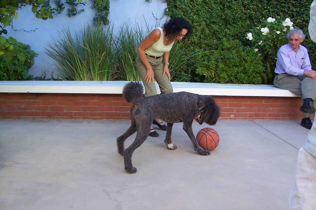Teddy, der Pudel von Kim Benson (l.) ist eigentlich ein gut erzogener, intelligenter Hund, doch er hat eine schlechte Angewohnheit, die seine Besitz... - Bildquelle: Rive Gauche Intern. Television