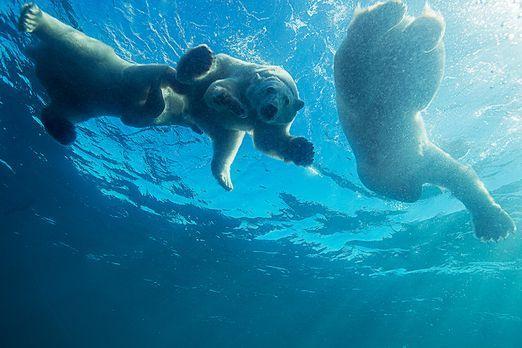 BP_Eisbärenfamilie - Bildquelle: Amos Nachoum / Barcroft USA
