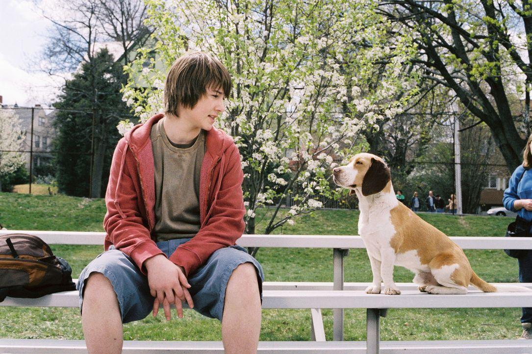 Nur Jack (Alex Neuberger, l.) weiß, dass sein unscheinbare Beagle Shoeshine kein Underdog, sondern ein Superhund ist ... - Bildquelle: Walt Disney Pictures.  All rights reserved
