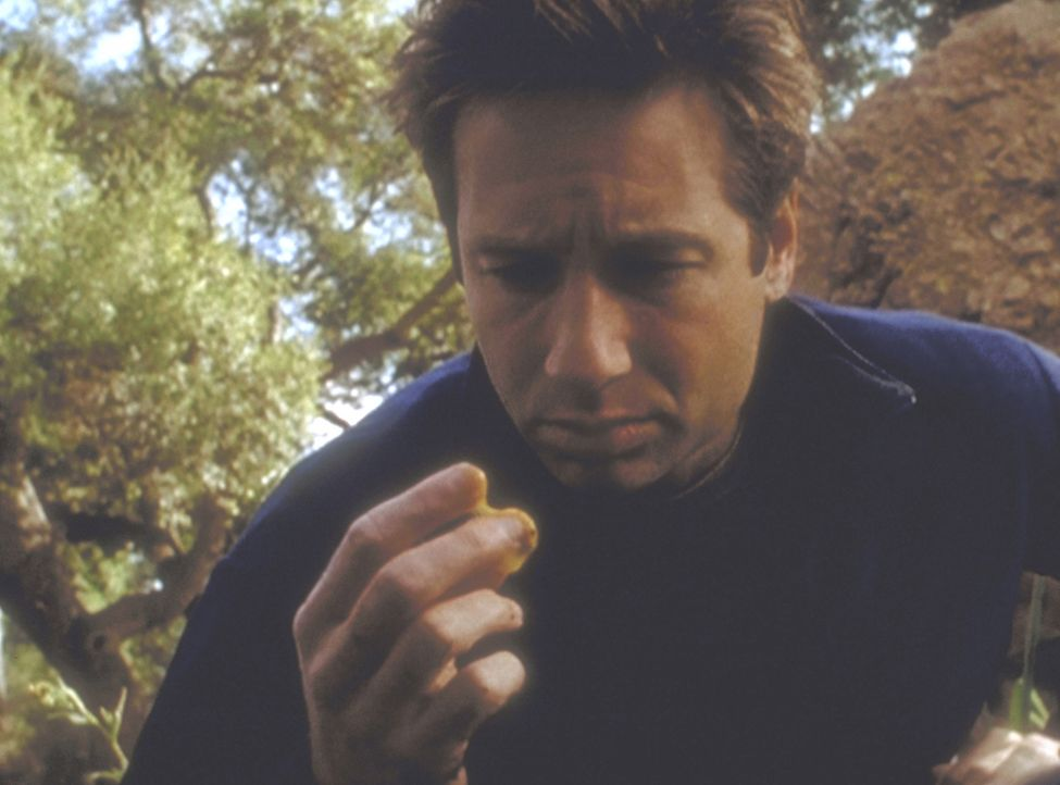 Mulder (David Duchovny) entdeckt am Fundort zweier Skelette einen mysteriösen grünlichen Schleim. - Bildquelle: TM +   2000 Twentieth Century Fox Film Corporation. All Rights Reserved.