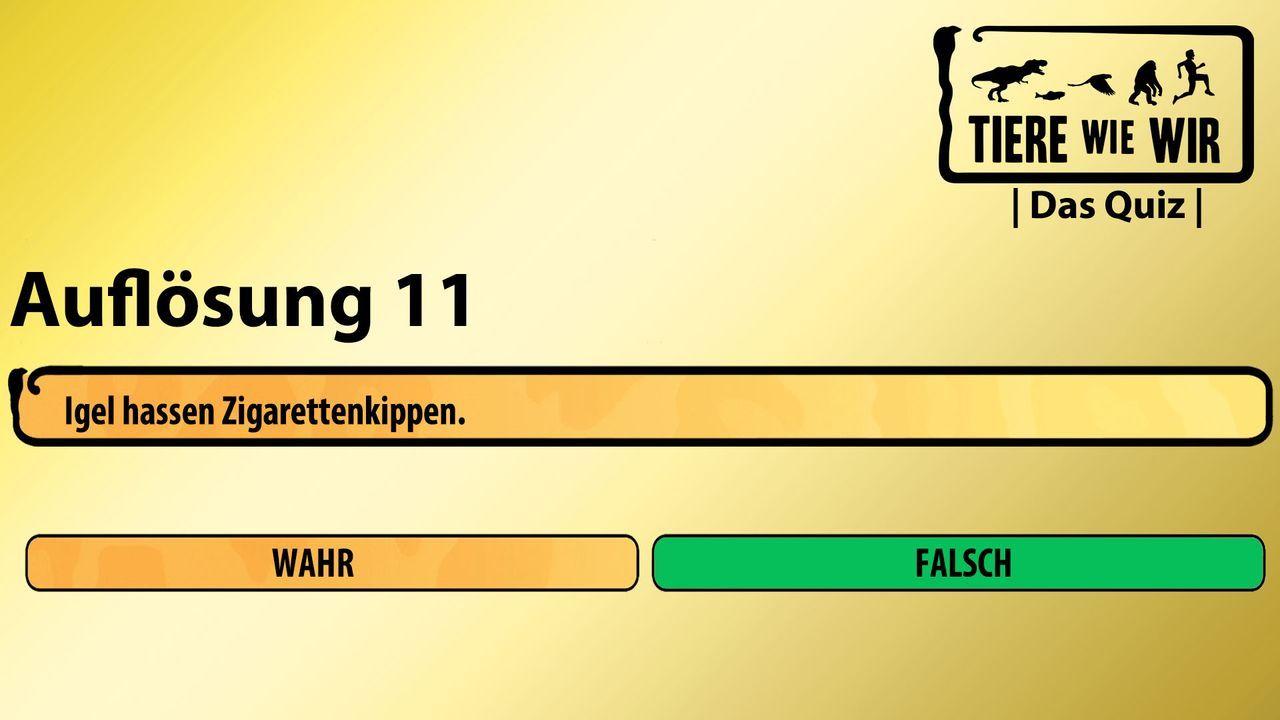11_Auflösung_WF_Igel
