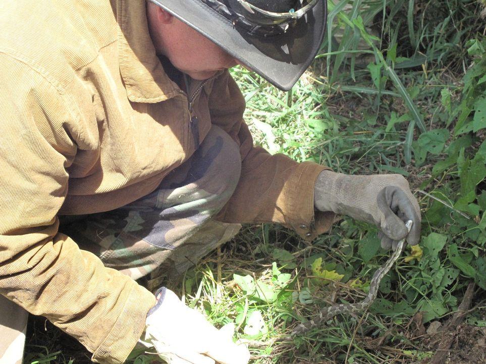 Schildkröten-Mann Ernie Brown Jr. fängt sämtliche wilden Tiere mit seinen bloßen Händen ... - Bildquelle: Discovery Communications
