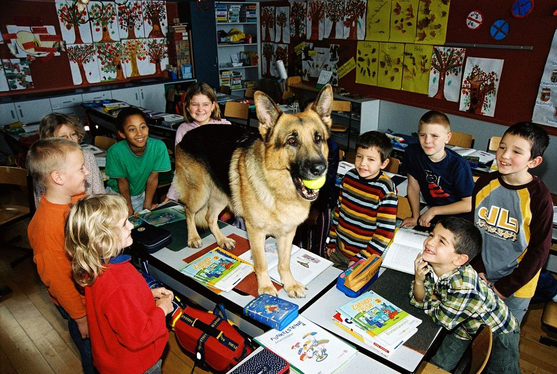 Die Ermittlungen in einem Mordfall führen Rex auch in eine Schule. Die Kinder freuen sich über den Besuch ... - Bildquelle: Ali Schafler Sat.1