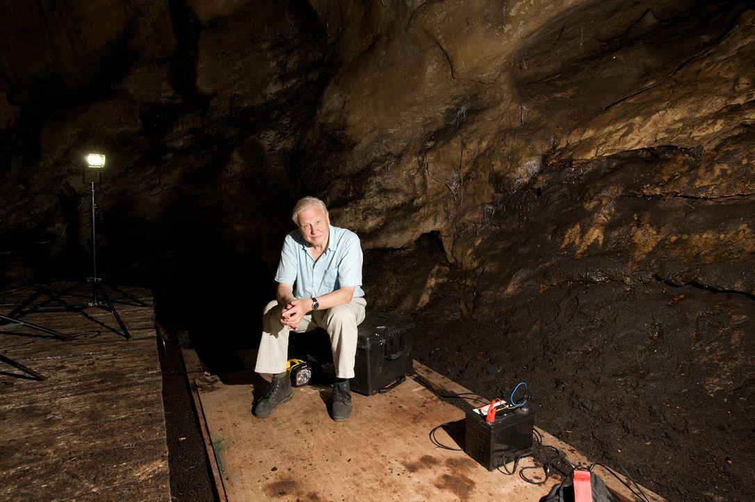Der britische Dokumentar - und Tierfilmer Sir David Attenborough kehrt an seine Lieblingsplätze der letzten 50 Jahre  zurück. In Borneo erinnert er... - Bildquelle: BBC 2012  All Rights Reserved
