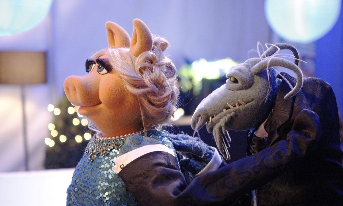 Onkel Tödlich (r.) bereitet Miss Piggy (l.) für ihren großen Auftritt auf dem roten Teppich vor ... - Bildquelle: Nicole Wilder ABC Studios