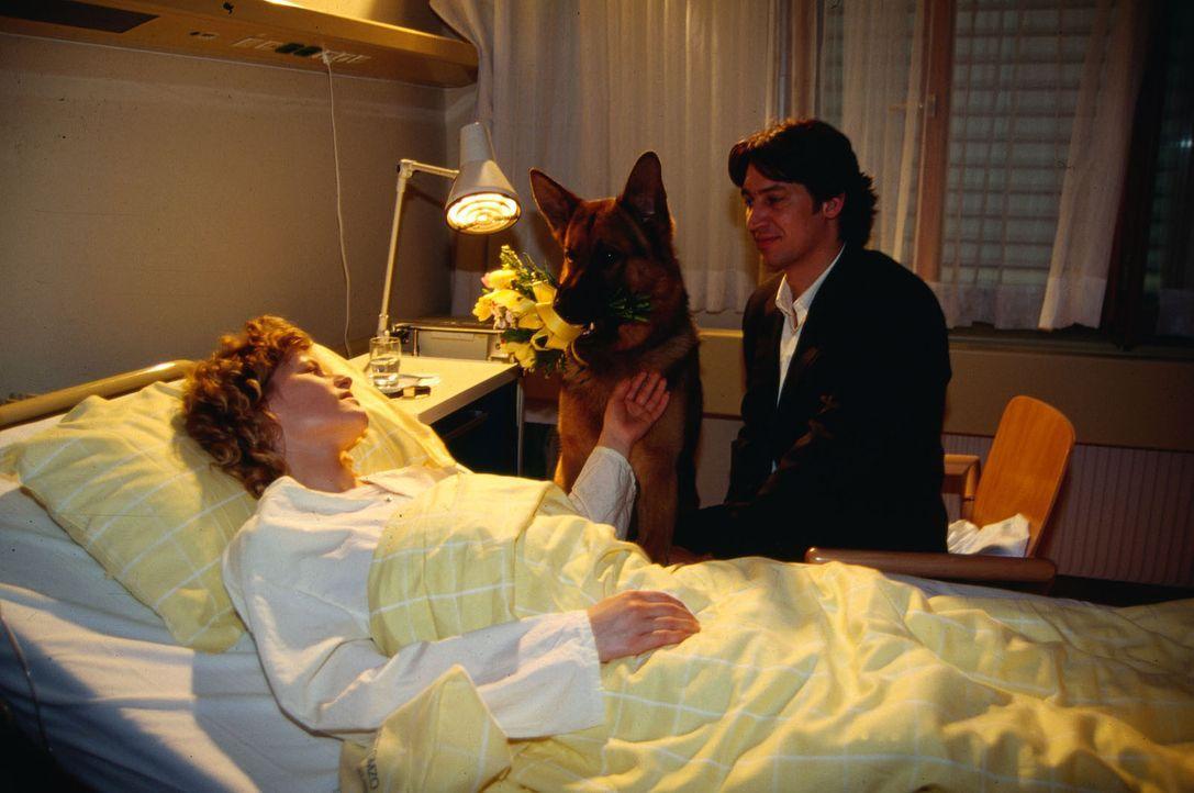 Rex und Kommissar Moser (Tobias Moretti, r.) besuchen Sylvia Hohenberg (Anne Kasprik, l.) die ihre Verletzungen im Krankenhaus auskuriert. Die junge... - Bildquelle: Ali Schafler Sat.1