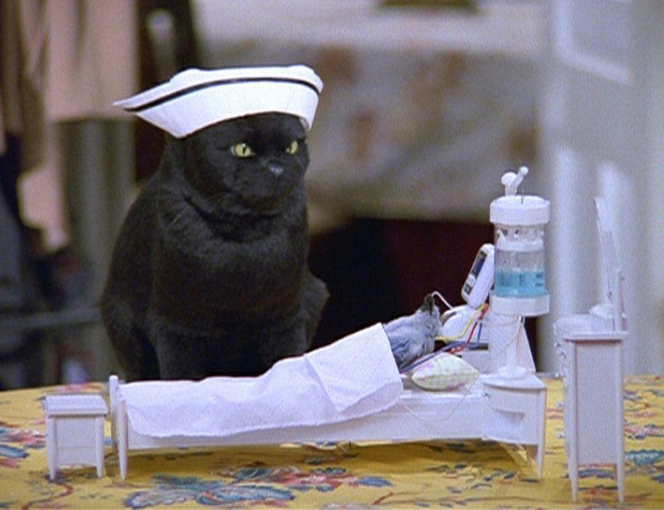 Salem hat ein Rotkehlchen in Pflege genommen. - Bildquelle: Paramount Pictures