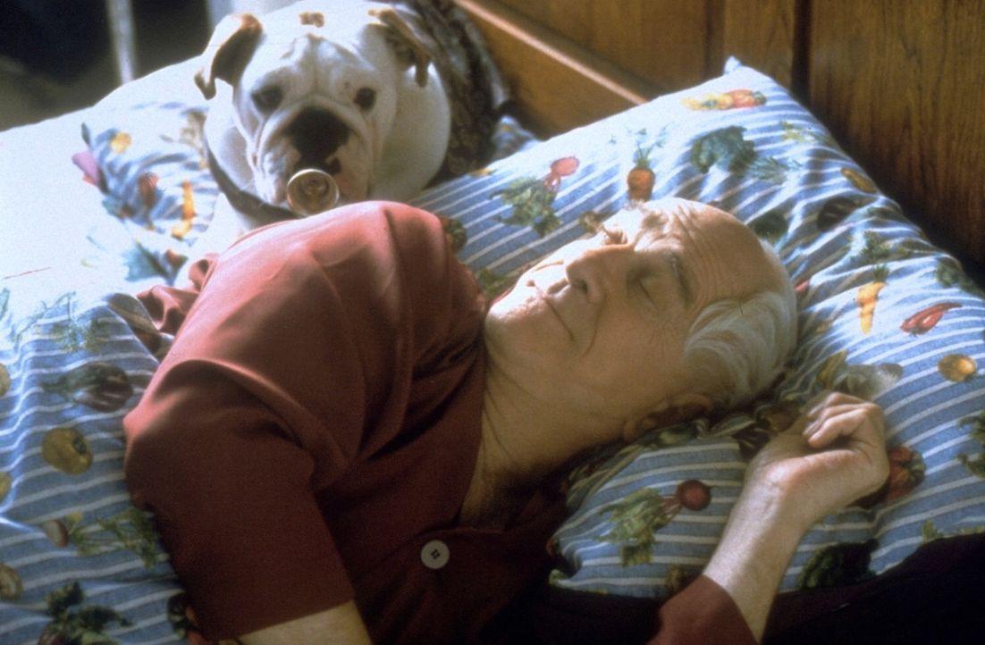 Seine Bulldogge ist sein Ein und Alles: Mr. Magoo (Leslie Nielsen) ... - Bildquelle: Walt Disney Pictures
