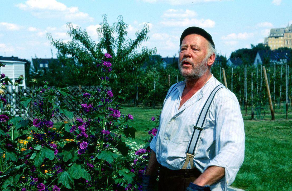 Schorsch (Jost Siedhoff) kümmert sich um seine Blumenbeete. - Bildquelle: Krajewsky Sat.1