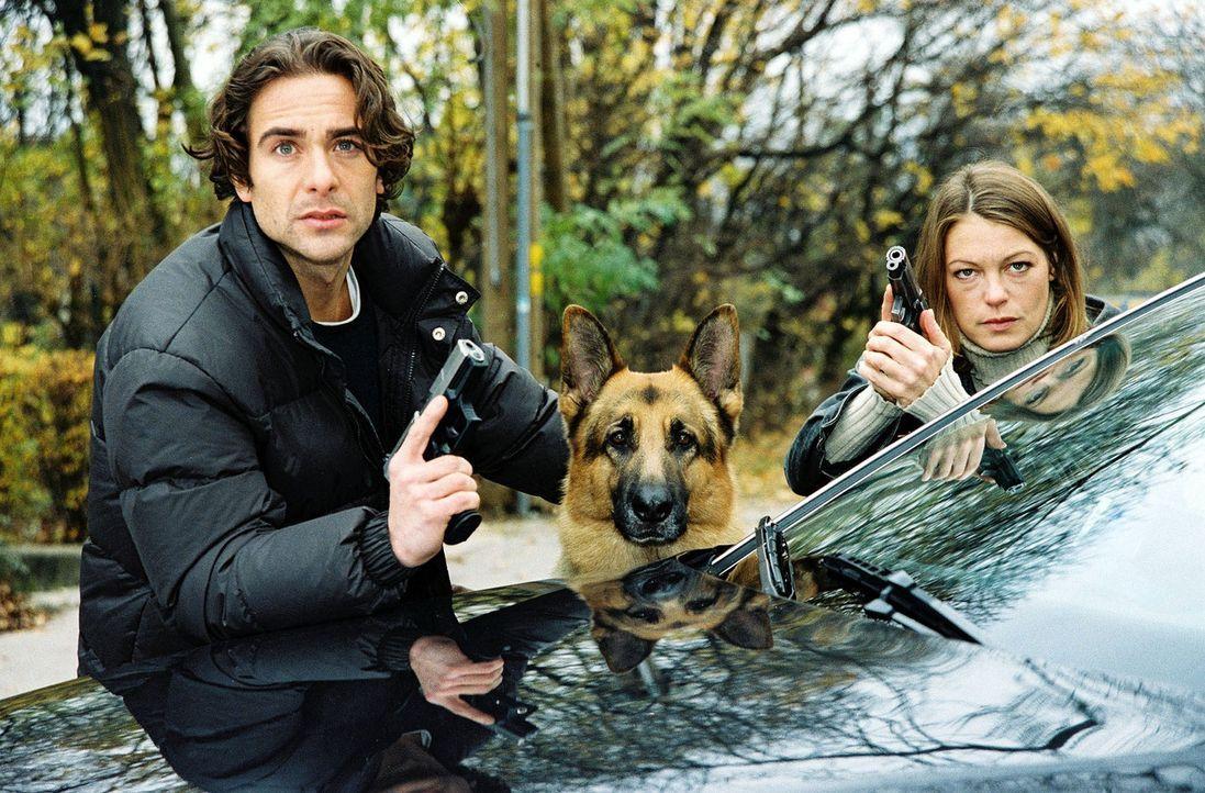 Marc (Alexander Pschill, l.), Niki (Elke Winkens, r.) und Rex auf Verfolgungsjagd ... - Bildquelle: Sat.1