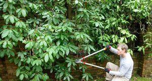 Gartengestaltung_2016_02_29_Rhododendron schneiden_Bild 2_fotolia_Horticulture
