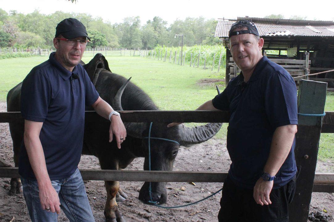Toto (r.) und Harry (l.) - die beiden wohl bekanntesten Polizisten der Republik - hat es nach Brasilien verschlagen. Gemeinsam mit den Kollegen vor... - Bildquelle: kabel eins