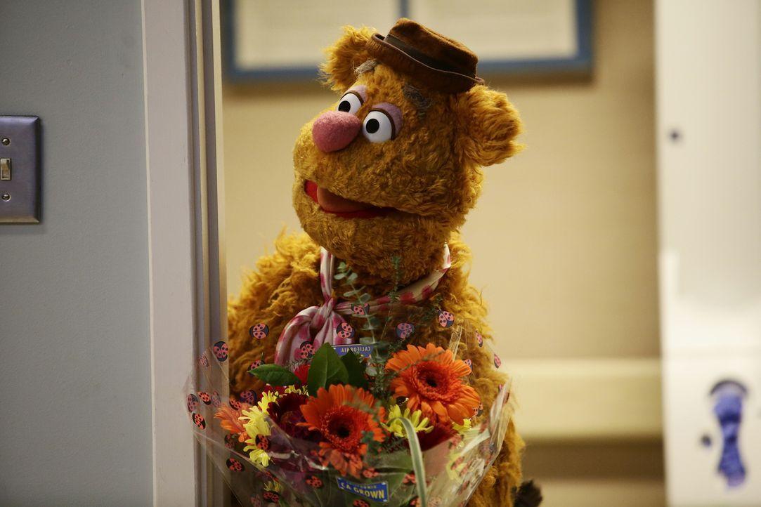 Während der Show passiert Fozzie Bär mit einer T-Shirt-Kanone ein Unglück. Nun muss er sich bei Statler, den er abgeschossen hat, entschuldigen ... - Bildquelle: Nicole Wilder ABC Studios