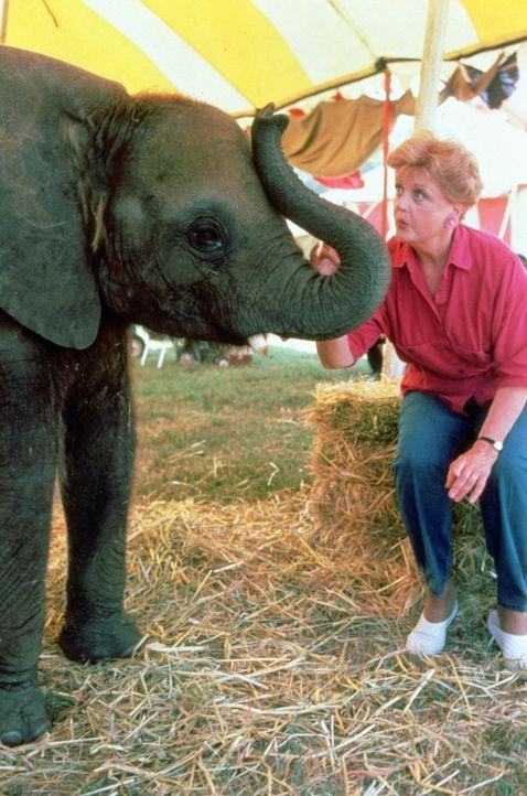 In einem Zirkus geschehen seltsame Unglücksfälle. Jessica Fletcher (Angela Lansbury) macht sich auf die Suche nach den Ursachen ...