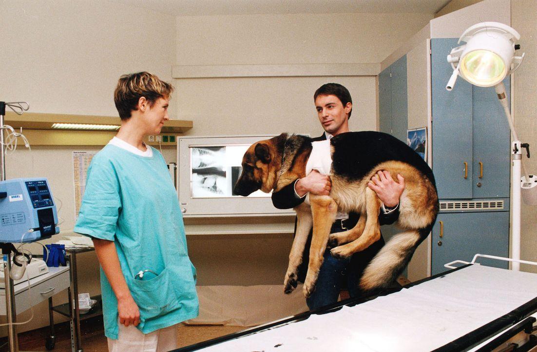 Bei einem nächtlichen Schießduell ist Rex verletzt worden. Kommissar Brandtner (Gedeon Burkhard, r.) bringt seinen Partner zur Tierärztin (Johann... - Bildquelle: Sat.1