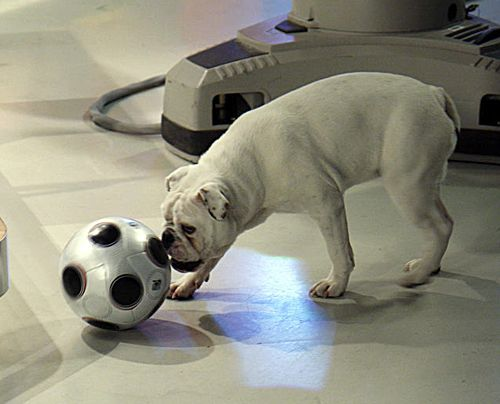 fruehstuecksfernsehen-studiohund-lotte-in-action-im-studio-021 - Bildquelle: Ingo Gauss