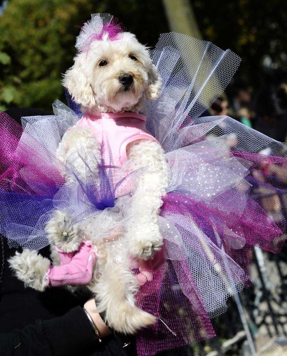 Hund im Tutu - Bildquelle: getty-AFP