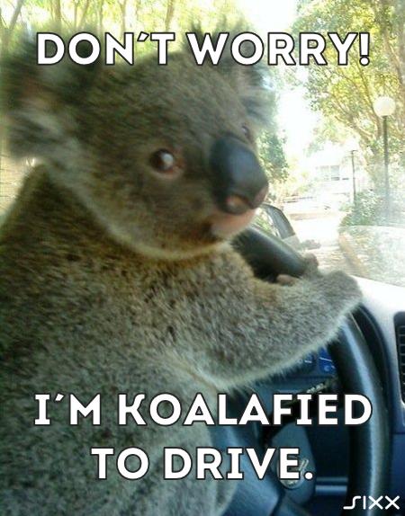 Visual Statements: Koala am Steuer - Bildquelle: sixx