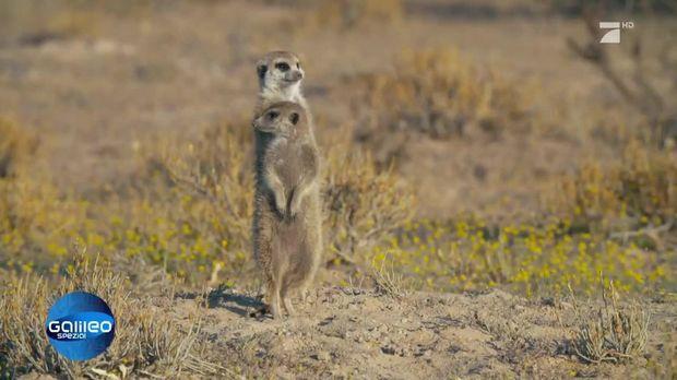 Galileo - Video - Können Tiere lügen? - ProSieben