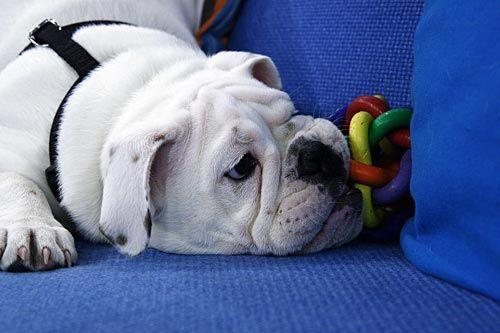 fruehstuecksfernsehen-studiohund-lotte-baby-011 - Bildquelle: Stefan Pulvermüller