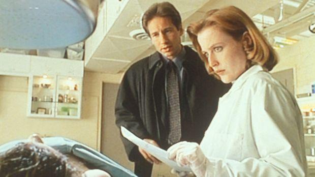 Mulder (David Duchovny, M.) und Scully (Gillian Anderson, r.) staunen nicht s...