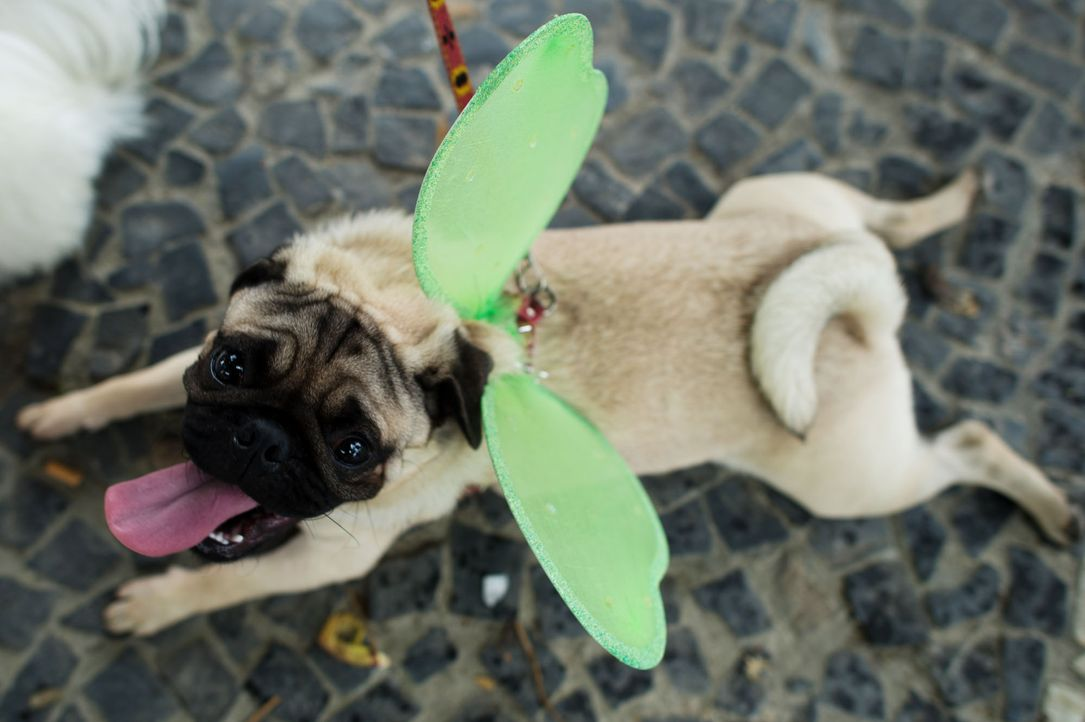Hund mit Schmetterlingsflügeln - Bildquelle: Christophe Simon / Getty Images / AFP