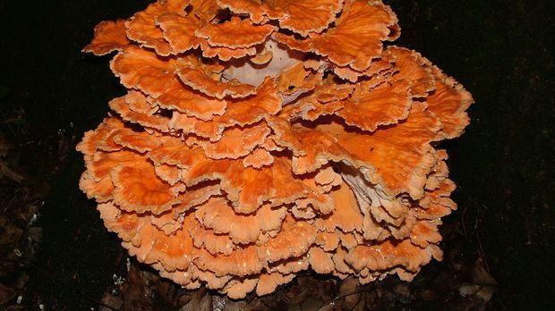 Sporen von Pilzen sind allgegenwärtig - auf unserer Haut, auf Oberflächen und...