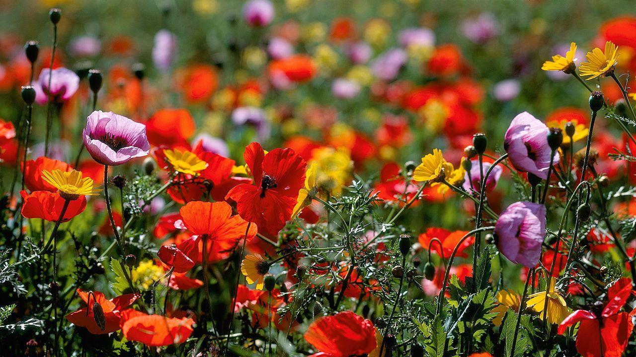 Blumen sagen mehr als Worte - Bildquelle: MEV Verlag