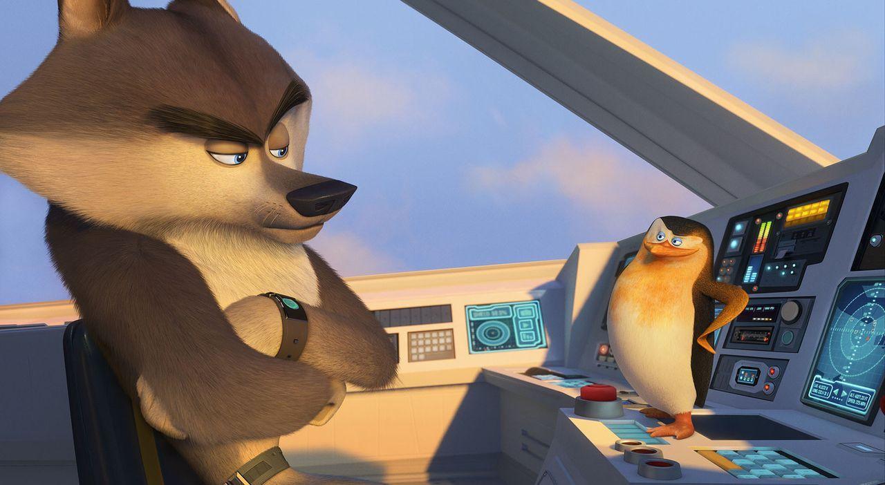 """Nachdem Skipper (r.) und seine drei Kameraden Rico, Kowalski und Private dem bösen Dr. Octavius Brine mithilfe der Geheimorganisation """"Nordwind"""" und... - Bildquelle: 2014 DreamWorks Animation, L.L.C.  All rights reserved."""