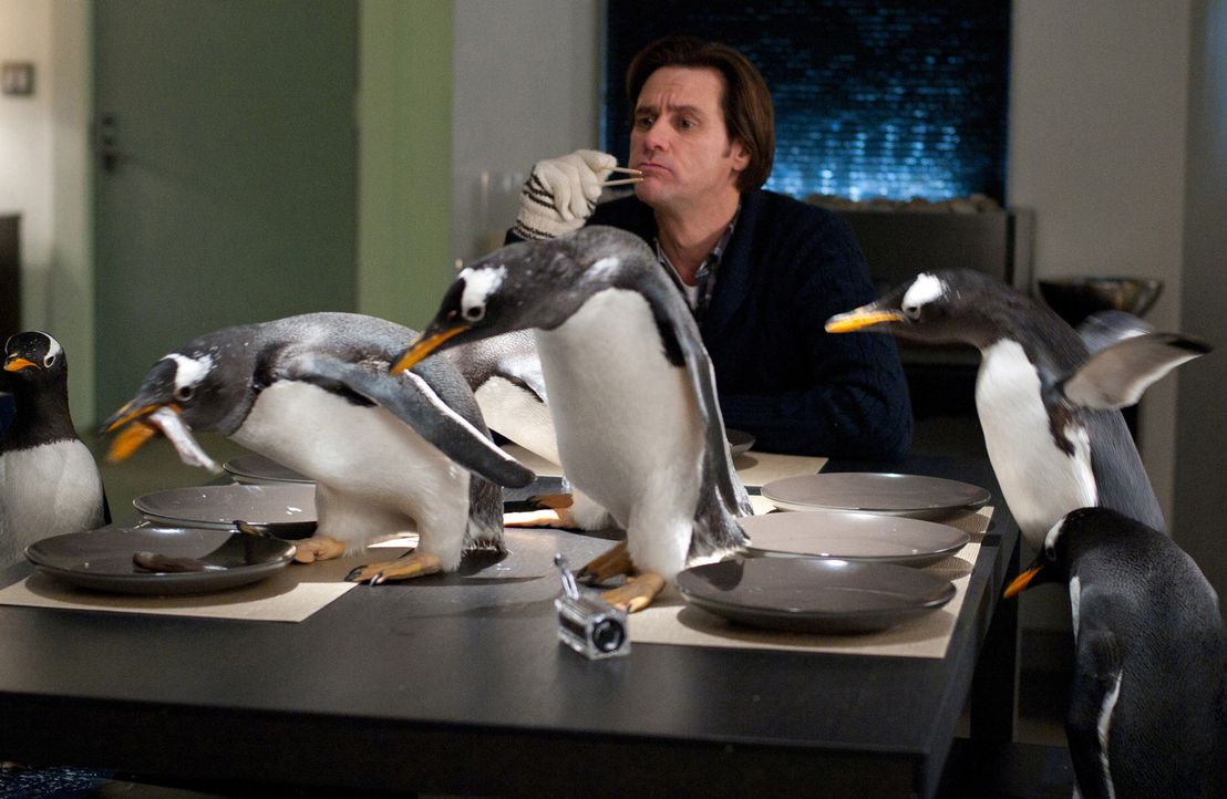 Das Leben von Immobilienmanager Tom Popper (Jim Carrey) läuft wie geölt. Bis ihm die Erbschaft seines Vaters sechs leibhaftige Pinguine ins Haus f... - Bildquelle: 2011 Twentieth Century Fox Film Corporation. All rights reserved.