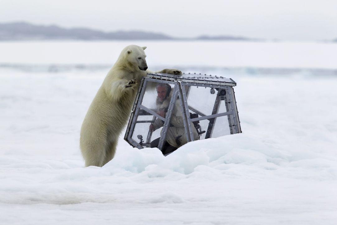 """Eine bärensichere Kamerakonstruktion, der """"Eiswürfel"""", erleichtert Gordon Buchanan seine Arbeit und bietet einzigartige Momentaufnahmen ... - Bildquelle: Jason Roberts"""