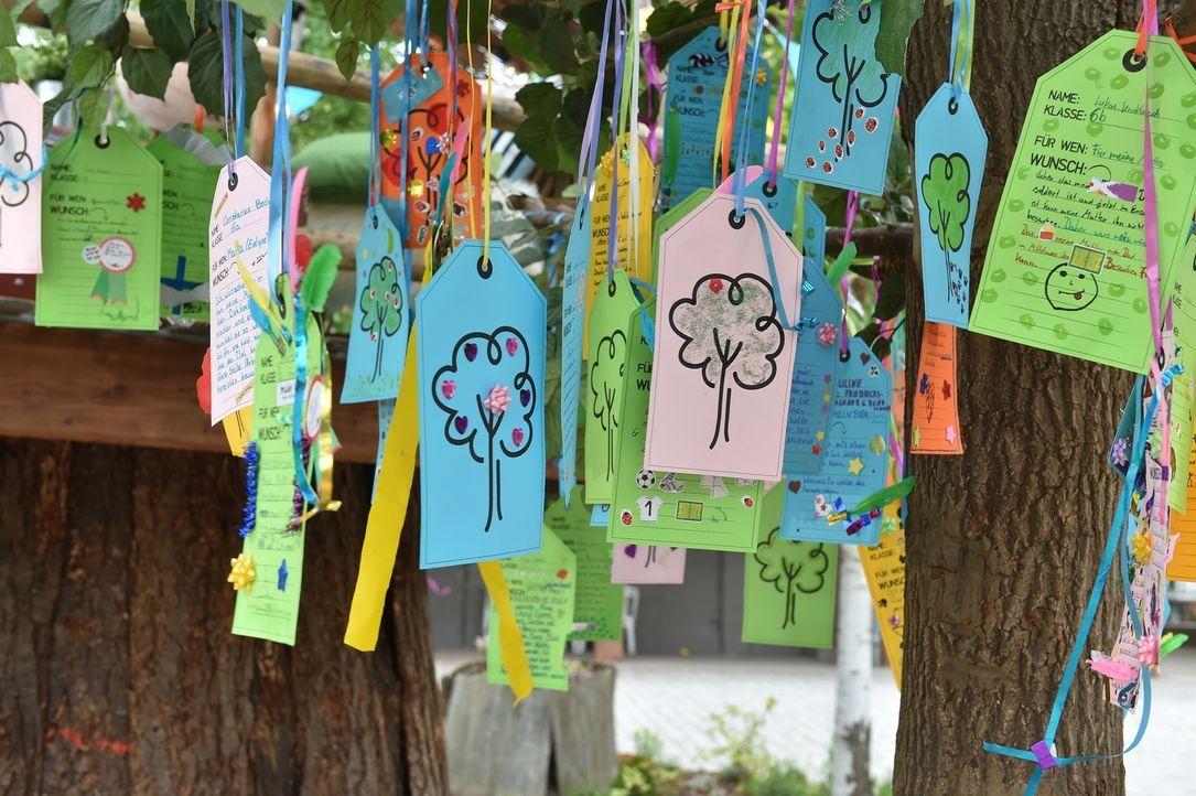 """Bei """"Der Wunschbaum - Kinder machen Träume wahr"""" können Kinder ihre Herzenswünsche notieren, doch nicht für sich selber, sondern für einen von ihnen... - Bildquelle: Andre Kowalski SAT.1"""