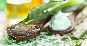Aloe Vera: Pflege-tipps Für Die Wunderpflanze | Sat.1 Ratgeber Aloe Vera Pflanze Pflege Anwendung
