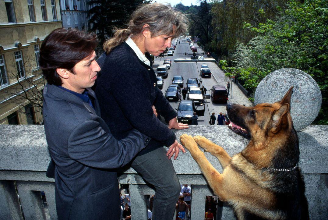 Frau Dr. Foltyn (Cornelia Froboess, M.) will sich von der Brücke stürzen. Kommissar Moser (Tobias Moretti, l.) und Rex kommen gerade noch rechtzeiti... - Bildquelle: Ali Schafler Sat.1