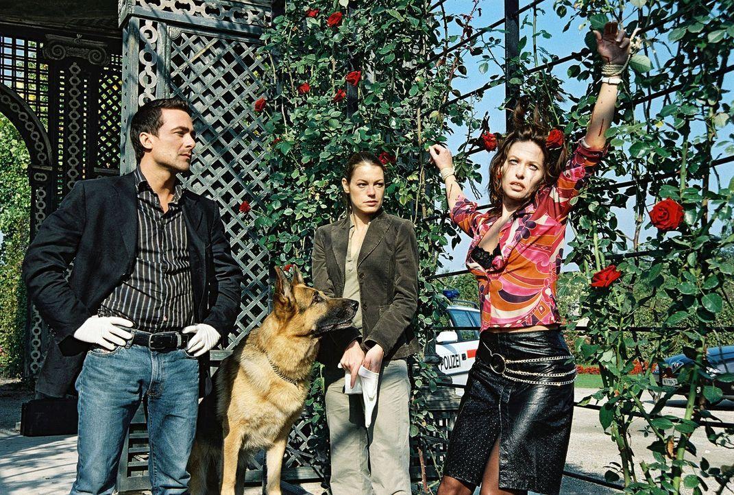 Marc (Alexander Pschill, l.), Niki (Elke Winkens, M.) und Rex finden eine weitere Leiche. Eva Süß (Silvia Wohlmuth, r.) wurde an einer Rosenhecke... - Bildquelle: Sat.1